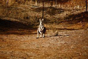 Autovermietung Tamworth, Australien