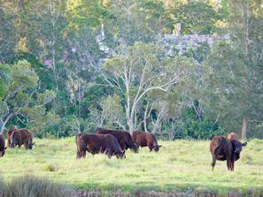 Autovermietung Taree, Australien
