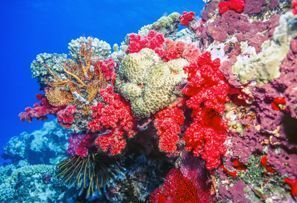 Autovermietung Coral Coast, Fiji